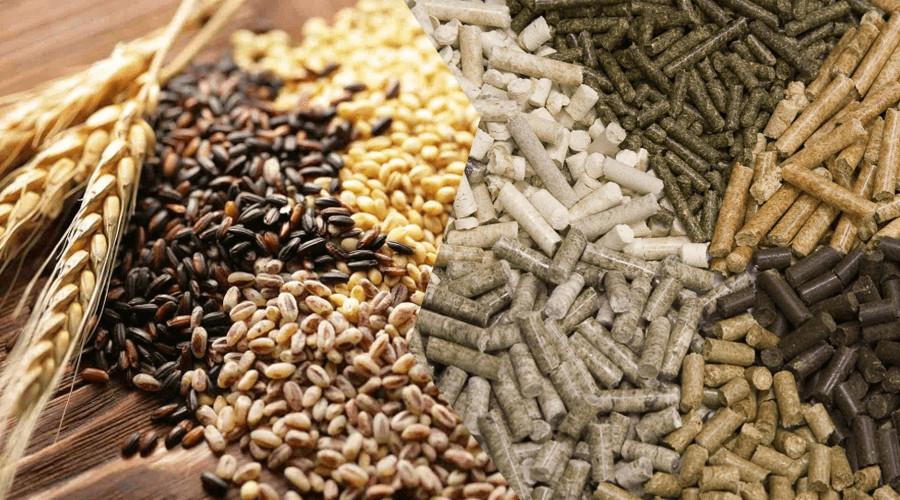 На фото уже готовые гранулы комбикорма, а также зерно которое гранулятор перерабатывает на комбикорм